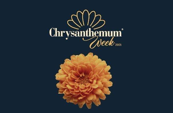 chrysanthemum-week-in-colombia.jpg
