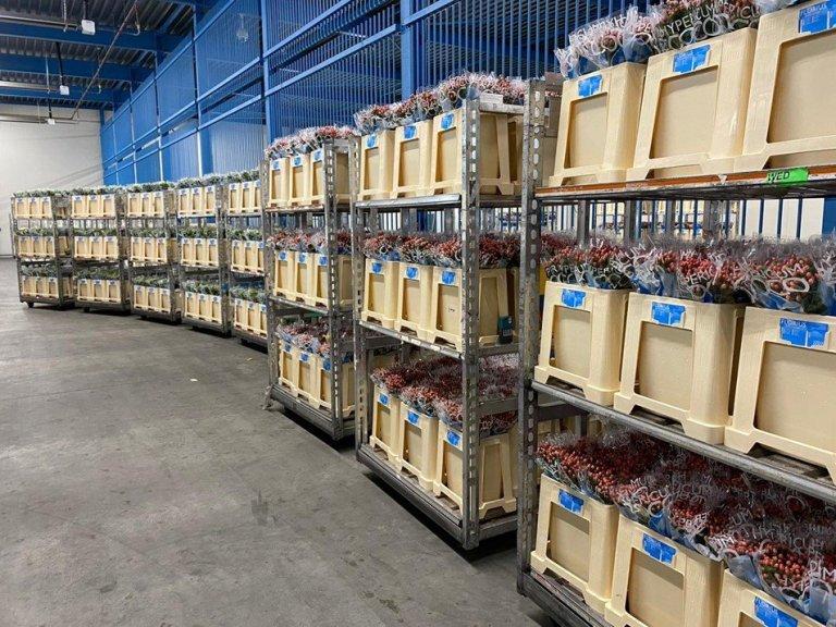 primera-exportacion-de-flores-desde-colombia.jpg